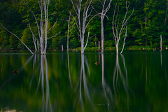 A Deeper Magic - in explore (SunnyDazzled) Tags: trees sunset summer lake reflection green nature pool night landscape dead evening newjersey bare deep surreal august spooky trunks stories pong stumps flooded drowned longpond ironworksstatepark
