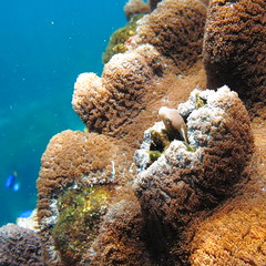 IMG_7466 (d3_plus) Tags: snorkeling freediving izu g12 伊豆 シュノーケリング 南伊豆 togai hirizo 中木 フリーダイビング ヒリゾ浜 nakagi canonpowershotg12 トガイ浜 is04