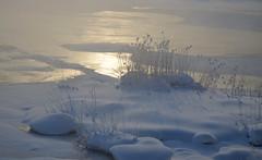 Vanha Kaupunki (fede_gen88) Tags: winter mist snow cold ice water fog suomi finland river frozen helsinki nikon europe smoke oldtown vanhakaupunki vantaariver d5100