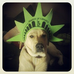 Dog of Liberty (BlytheGirl123) Tags: dog square golden labrador sweet hund squareformat retriver iva earlybird iphoneography instagramapp uploaded:by=instagram