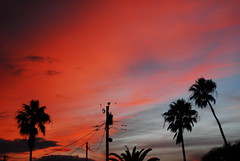 red clouds and palm trees (tiffanycsteinke) Tags: sunset red sky florida palmtree dunedin fl dunedinflorida
