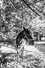 Ney (Chadwise) Tags: horse angle wide equestrian