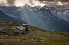 Swiss Summer Sunset in Rotenboden . (Zermatt) . no. 1206 (Izakigur) Tags: summer italy mountains alps alpes landscape liberty schweiz switzerland nikon europa europe flickr suisse suiza swiss feel gornergrat 1755mmf28g zermatt monterosa matterhorn d200 alpen helvetia nikkor svizzera wallis ch valais dieschweiz musictomyeyes  1755 suizo  myswitzerland lasuisse nikond200 nikkor1755f28 nikkor1755  rotenboden nikon1755f28g 300faves   izakigur cantonduvalais  suisia imagesforthelittleprince laventuresuisse bestcapturesaoi mygearandme izakigur2010 izakiguralps izakigurzermatt