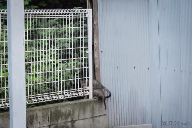 Today's Cat@2012-09-22