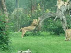 """Longleat Safari Park • <a style=""""font-size:0.8em;"""" href=""""http://www.flickr.com/photos/81195048@N05/8017623966/"""" target=""""_blank"""">View on Flickr</a>"""