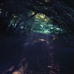 Green tunnel (Skink74) Tags: uk morning trees light shadow england green 120 6x6 film sunrise early chalk ditch kodak earth path branches hampshire bronica danebury ektar c41 s2a tetenal zenzabronicas2a ektar100 zenzanon100f28 zenzanon100mm128 s2ac023