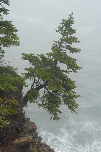 On cliff edge