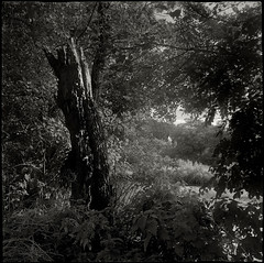 Derbyshire Wye - Peering through to Elliott Holme (Regular Rod) Tags: roof light shadow blackandwhite sunlight tree 120 nature water monochrome river fishing day derbyshire peakdistrict ilfordhp5 flyfishing trout mamiya6 gable bakewell alder angler naturesfinest bsquare catchandrelease dixactol ysplix natureselegantshots rnbderbyshirewye derbyshirewye standingdeadwood mamiya6folding