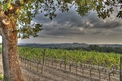 Pontignano 2 (HDR) (Ossiridian) Tags: italy italia wine tuscany chianti siena toscana vino certosadipontignano