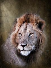 Wildlife Kenya - Lion (miacat63) Tags: africa painterly art painting effects artwork triangle paint colours kenya lion silhouettes leopard zebra layers cheetah giraffe textured masaimara waterbuck maasaimara wildllife masaimara1 miacat63
