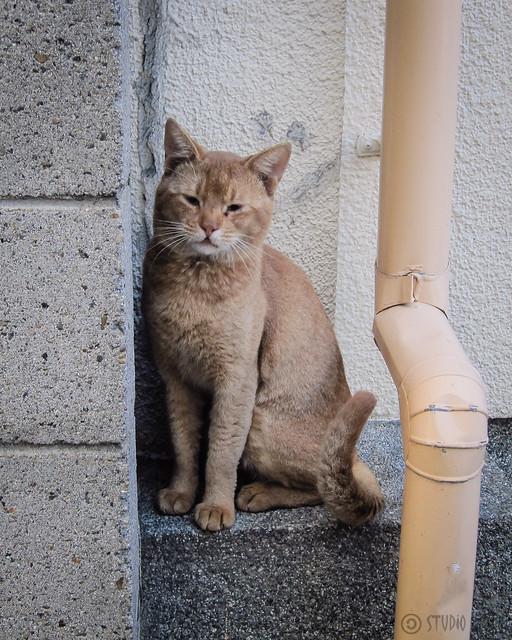 Today's Cat@2012-09-27