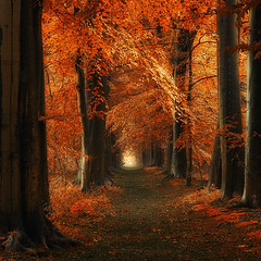 The way Home (Oer-Wout) Tags: trees tree nature forest woods path thesecretlifeoftrees
