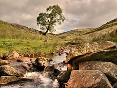 Lonely Tree - Thursden Brook (Daveyboy_75) Tags: tree water stream olympus lancashire rapids boulders brook hdr pennines lonelytree colne thursden lonesometree e450 thursdenbrook