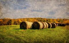Fall Bales (TicKavich) Tags: autumn sky fall leaves farm hay bales kurtpeisergallery