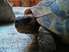 Ugo (E Pulejo) Tags: portrait pets animals fauna garden close tortoise shell micro tartaruga ugo