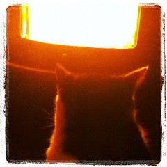 Frida by the fireplace (Bim Bom) Tags: cat square frida squareformat lordkelvin iphoneography instagramapp uploaded:by=instagram