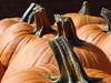 From the Pumpkin Patch (picsbyrita) Tags: orange fall pumpkin stem kentucky cloverport ansh scavenger17 allnewscavengerhunt