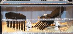 Comb the Desert (notenoughbricks) Tags: lego legostarwars spaceballs nycc legomoc combthedesert ilugny newyorkcomiccon2012
