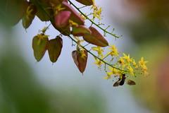 Hang on (Sowjanya _) Tags: summer funny quote bee breeze hang sway brojek