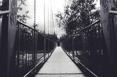 Crossing (calmingechoes) Tags: bridge monochrome forest outdoors nikon sweden outdoor abisko