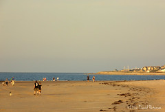 Beach life (David Paterson photos) Tags: sunset covesea beach lossiemouth morayfirth scotland skies