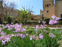 Rabat kasbah des Oudaya_0542 (JespervdBerg) Tags: holiday spring 2016 africa northafrican tamazight amazigh arab arabic moroccanstyle moroccan morocco maroc marocain marokkaans marokko rabat qasbah kasbah qasba oudayas oudaias