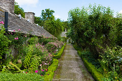 Pitmuies Garden 13 August 2016-0002.jpg (JamesPDeans.co.uk) Tags: digital downloads for licence landscape flowers plants gb prints sale garden unitedkingdom scotland britain vanishingpoint gardens angus nature man who has everything europe uk james p deans photography digitaldownloadsforlicence jamespdeansphotography printsforsale forthemanwhohaseverything