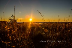 20160828-IMG_7752-WM (Pamela McLellan Zmija) Tags: saugeenshores portelgin sunset beach lakehuron goblesgrove sunshine pamelamclellanzmija