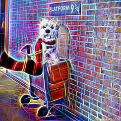 Platform 9 for Dogwarts Express (Lemon~art) Tags: treatthis kreativepeople dougal kingscrossstation london platform9 trolley suitcase scarf cage wall dogwartsexpress manipulation