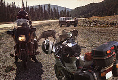 Mask_Alaska_Chris_goats (Sy_In_Indy) Tags: alaskahighway mountaingoats ft nelson britishcolumbia motorcycletouring