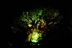 Animal Kingdom Aug 2016 #5 (*Amanda Richards) Tags: disney disneyworld orlando animalkingdom tree treeoflife nightshow lights night