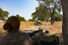 Zambia_LionCamp_252_elephant (atkiteach) Tags: zambia southluangwanationalpark southluangwa safari safaricamp camp nature naturereserve holiday rural africa lioncamp elephants elephant
