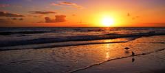 keep love in your heart (Bec .) Tags: keeploveinyourheart seagulls bec canon 80d 1022mm henleybeach adelaide southaustralia light sunset beautiful shore sand sky sun