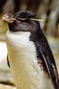 The Big Boss - Oceanario Lisbona (antoniosimula) Tags: oceanario lisbon lisbona lisboa portogallo portugal area expo fish flora fauna nikon d3200 35mm 70300 tamaron ocean species pacific atlantic indian