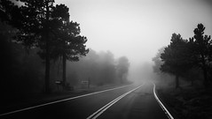 Road less traveled (Blockshadows) Tags: highway peaktopeak boulder nederland colorado sunroofphoto inmotion primelens prime f14 24mm sigma markiv 5d canon noir dark muted somber moody trees road rockymountains mountains outdoors nature lowvisibility thick foggy rain weather fog carshot monochrome bw white black blackandwhite bnw