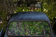 Drive! (Zen Roxy) Tags: green cars abandoned nature leaves decay windshield oldcars vipers bstns