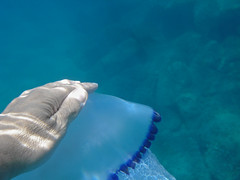 Contatto (Lumase) Tags: blue sea nature swimming swim jellyfish mediterranean hand touch sealife contact marinelife seafloor supershot contatto rhizostomapulmo