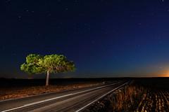 Te gusta conducir??? (raul_lg) Tags: road sky tree canon stars landscape arbol spain carretera paisaje amanecer cielo estrellas verano nocturna crepusculo linterna largaexposicion canon1635 canon5dmarkii raullg solarforcel600