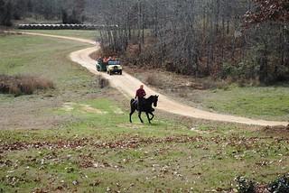 Alabama Quail Hunt - Davis Quail 16