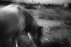 horse dreams (StephenCairns) Tags: blackandwhite bw horse blur japan canon  nocrop gifu icm   anpachi intentionalcameramovement stephencairns canon5dmarkii  homemadedigitalpinhole driveallnightdiane convertedbodycapintoapinholelens fourcompleterebuilds itsanoddwaytoshootasyoucantuseyourviewfindersocompositionislargelytrialanderrortimeconsumingandrequirespatience