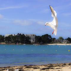 Cabrage de Mouette - IMG_5165 (WUV) Tags: nature canon eos vol plage oiseau mouette 600d