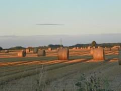 cast a long shadow (Martha-Ann48) Tags: sunset field sunshine glow shadows wheat straw fields bales cylindrical