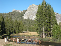 Mule train crossing the river - Tuolumne Meadows 8-27-2012 ld (Bob_ Perry) Tags: sierra yosemite yosemitenationalpark tuolumne mule tuolumnemeadows maylake wrangler packmule muletrain muleskinner california120 highsierracamps glenauline