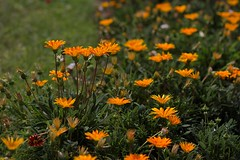 Flowers (Gwenal Piaser) Tags: orange paris france flower canon eos ledefrance 85mm august 7d usm trocadero francia canoneos 2012 parigi 85mmf18 ef85mm ef85mmf18usm canonef85mmf18usm ef85mmusm eos7d canoneos7d unlimitedphotos canonef85mm118usm gwenaelpiaser