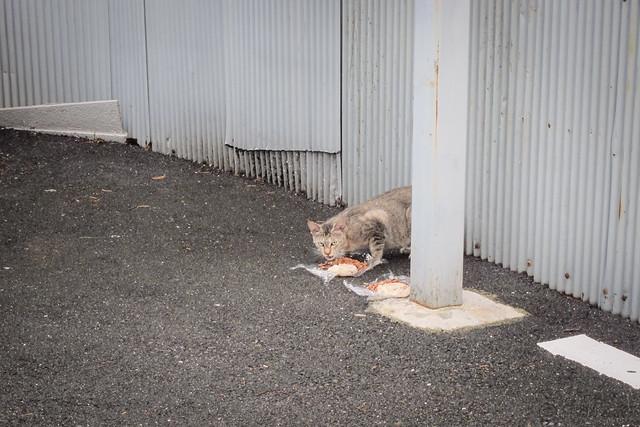 Today's Cat@2012-09-19