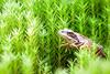 _MG_0496 (Den Boma Files) Tags: fauna dieren kikker amfibieen stropersbos