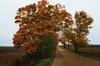 Colour Guard (Ivan Sorensen | www.ivansorensenphotography.com) Tags: road autumn trees light ontario canada fall leaves rural landscape nikon natural bright farm horizon colourful gravelroad niksoftware d7000 capturenx2 nikcep ivansorensenphotography
