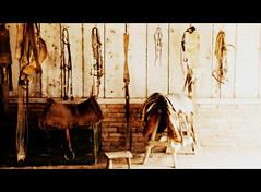 Galpo de estncia (Eduardo Amorim) Tags: brazil southamerica brasil banco estancia pelotas riograndedosul pampa campanha brsil apero amricadosul fronteira estribo amriquedusud basto sudamrica suramrica amricadelsur sdamerika estncia pelego cavalete galpo galpn arreios freio pilchas cabeada pilchasgauchas travesso americadelsud cincha ensilhas americameridionale eduardoamorim bual xergo sobrecincha ltego