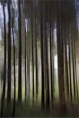 Balmaha Forest abstact (davidmccrone) Tags: abstract blur forest canon landscape scotland movement country trossachs lochlomond balmaha millarochy