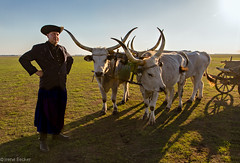 Hungarian Grey Cattle (Irene Becker) Tags: sky hungary cattle grasslands chariot herdsman mta szrkemarha hortobgy hungarianimages hungariangreycattle hajdubihar irenebecker hungariansteppecattle magyarszrkeszarvasmarha irenebeckerorg mtaimnes thehortobgynationalpark thehungarianpuszta whitehungarian